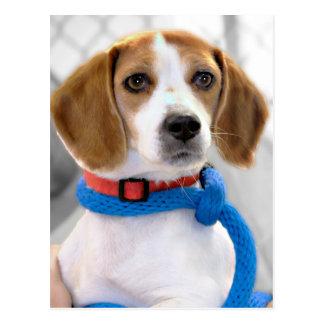 Foto del beagle del refugio postal