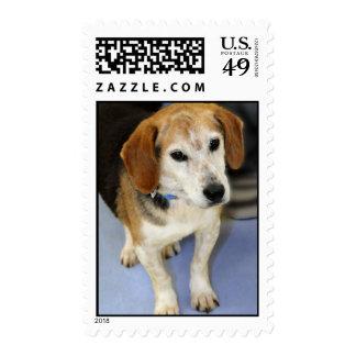 Foto del beagle sellos