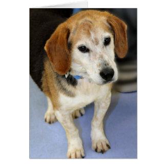 Foto del beagle tarjeta de felicitación