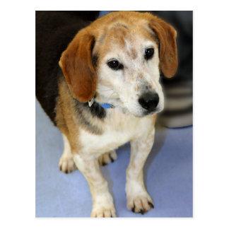 Foto del beagle postal