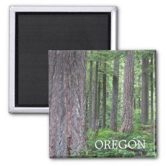 Foto del bosque de Oregon Imán Cuadrado