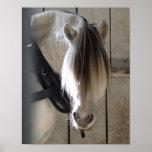 Foto del caballo del misterio poster