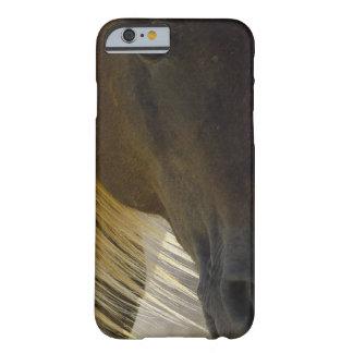 Foto del caballo del mustango funda de iPhone 6 barely there