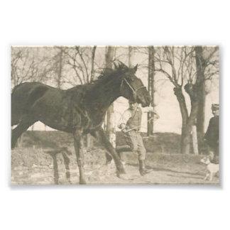 Foto del caballo del vintage cojinete