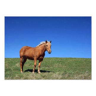 Foto del caballo cojinete