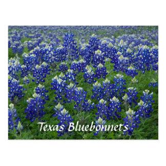 Foto del campo de los Bluebonnets de Tejas Postal