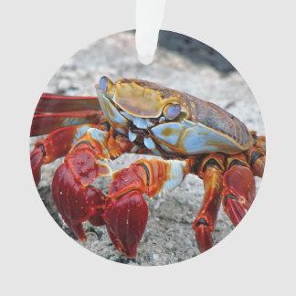 Foto del cangrejo