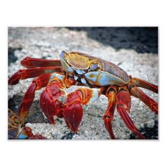 Foto del cangrejo fotografía