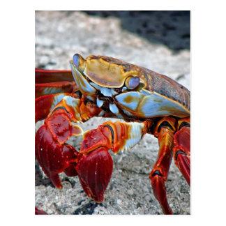 Foto del cangrejo tarjetas postales