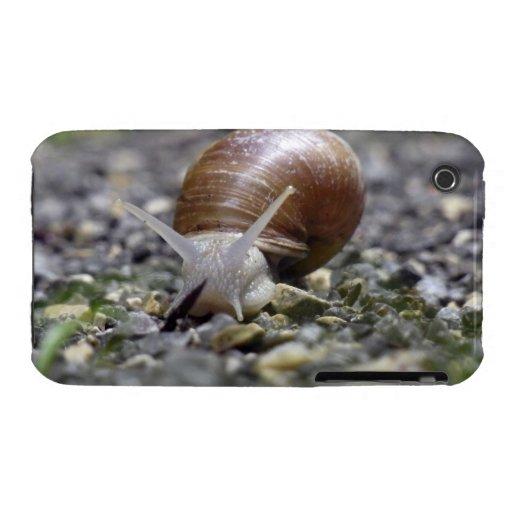 Foto del caracol iPhone 3 Case-Mate protectores