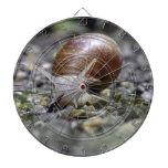 Foto del caracol tabla dardos