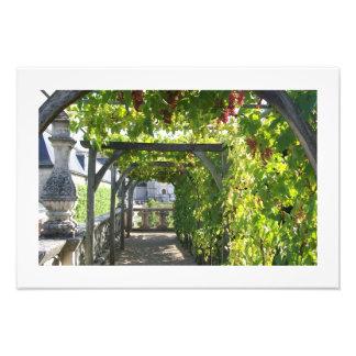 Foto del cenador de uva en el palacio de Villandry Fotografía