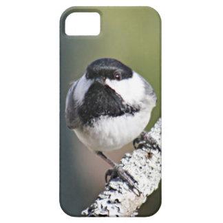 Foto del Chickadee iPhone 5 Carcasas
