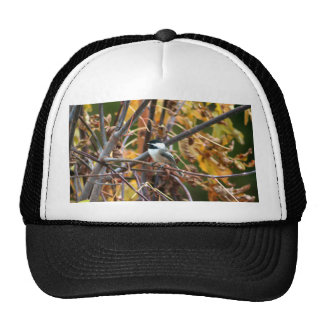 Foto del Chickadee Negro-Capsulado lindo Gorro De Camionero