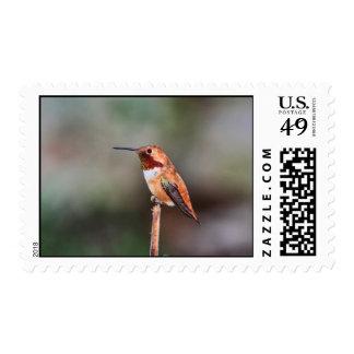 Foto del colibrí
