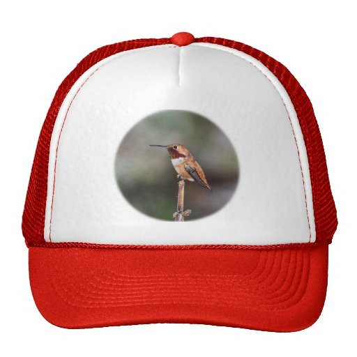 Foto del colibrí gorra