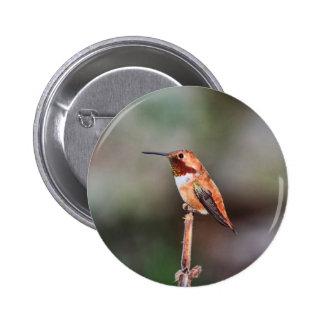 Foto del colibrí pin redondo de 2 pulgadas