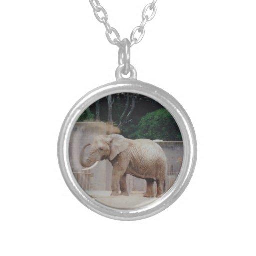 foto del collar del elefante