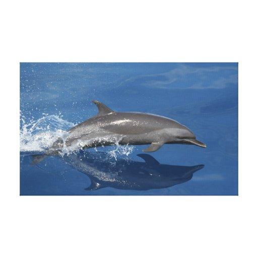 Foto del delfín impresión en tela