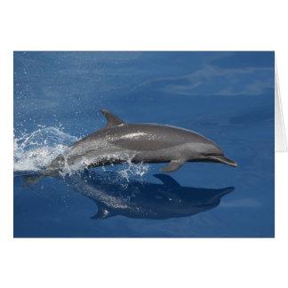Foto del delfín tarjeta de felicitación