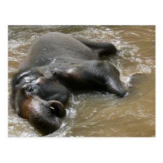 Foto del día del baño del elefante en Tailandia Tarjetas Postales