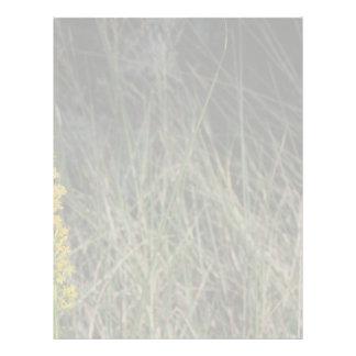 Foto del diseño del fondo de la hierba verde de Br Membrete A Diseño