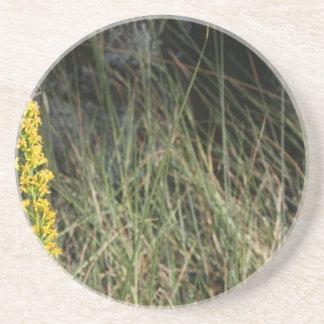 Foto del diseño del fondo de la hierba verde de Br Posavasos Cerveza