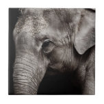 Foto del elefante tejas