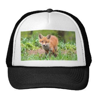 Foto del equipo adorable del zorro rojo gorros bordados