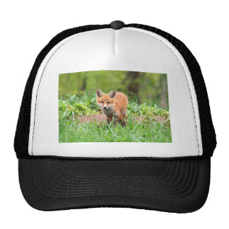 Foto del equipo curioso del zorro gorras de camionero