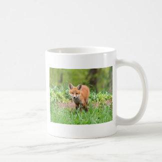 Foto del equipo curioso del zorro taza