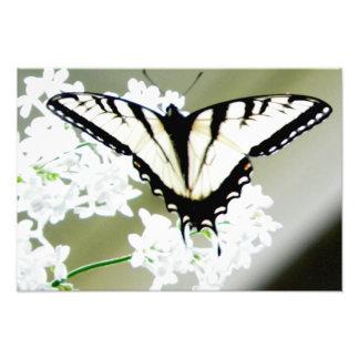Foto del este de la mariposa de Swallowtail del ti