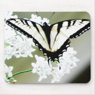 Foto del este de la mariposa de Swallowtail del ti Tapetes De Ratones