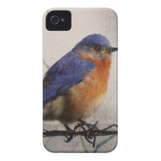 Foto del este del Bluebird iPhone 4 Case-Mate Funda