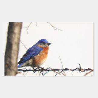 Foto del este del Bluebird Rectangular Pegatina