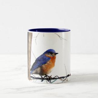 Foto del este del Bluebird Taza De Café De Dos Colores