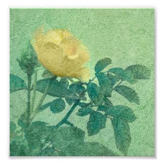 Foto del estilo del vintage del rosa amarillo cojinete