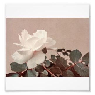 Foto del estilo del vintage del rosa blanco en fotografía