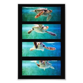 Foto del estudio de la tortuga de mar del necio fotografía