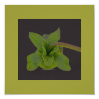 Foto del flor de la hoja