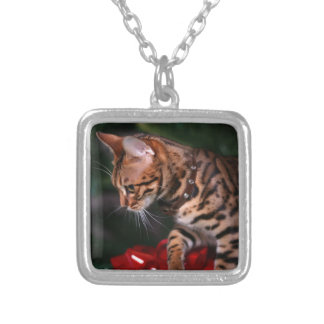 Foto del gatito del navidad (gato nacional de Beng Grimpola