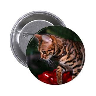 Foto del gatito del navidad gato nacional de Beng
