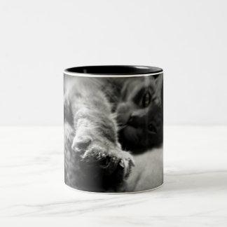 Foto del gato del gatito taza de café de dos colores