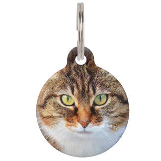 Foto del gato identificador para mascotas
