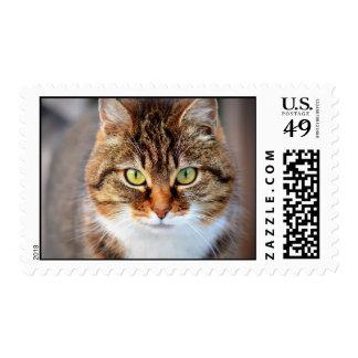 Foto del gato sellos postales