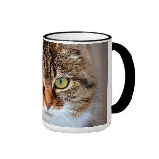 Foto del gato taza a dos colores