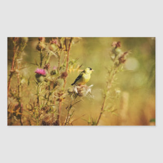 Foto del Goldfinch Pegatina Rectangular