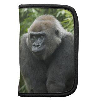 Foto del gorila organizador