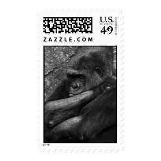 Foto del gorila sellos