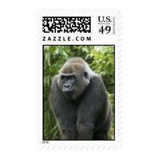Foto del gorila sello
